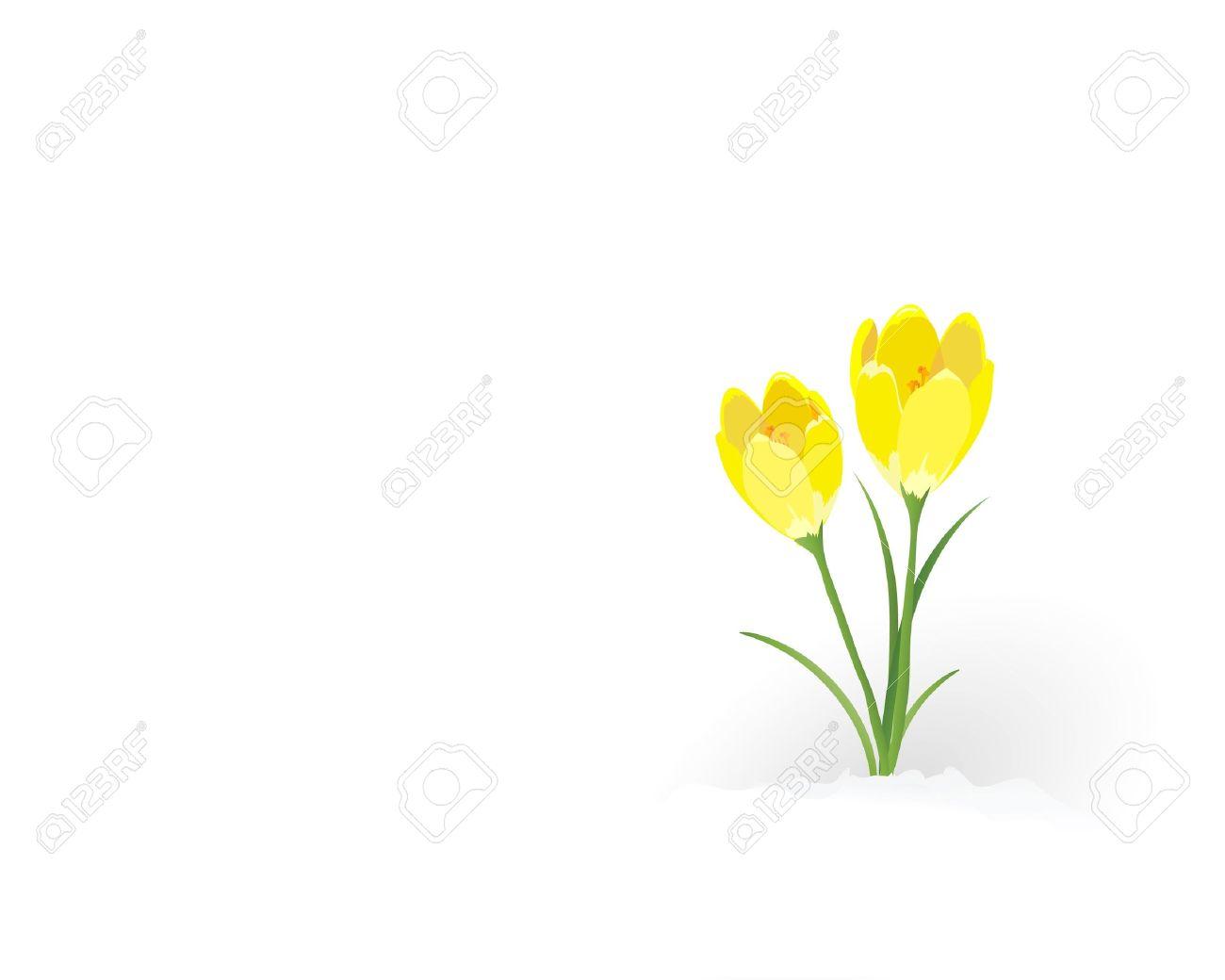 Yellow Crocus Clip Art.