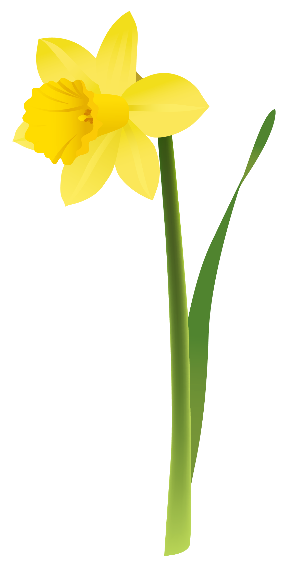 Yellow Daffodils Clipart.
