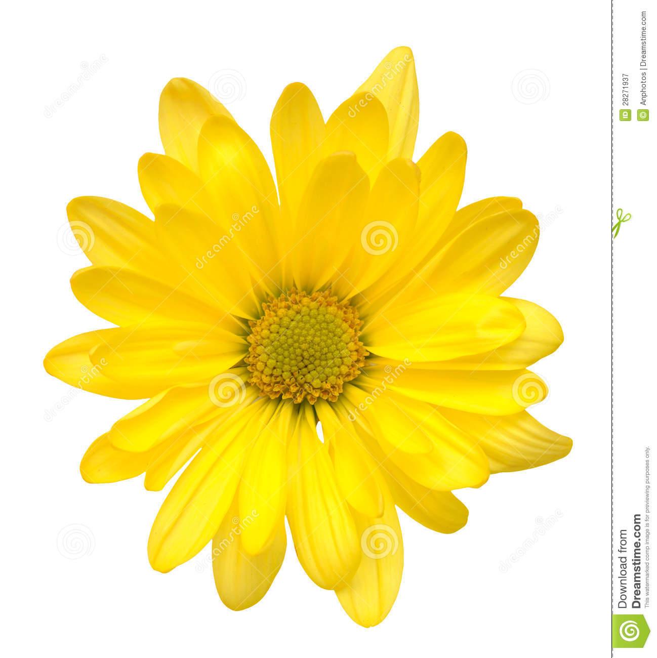 Yellow Daisy Clipart.