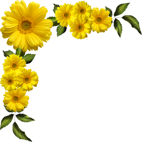 Yellow Daisies Transparent Clipart.