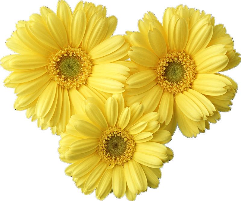 Yellow daisy clipart
