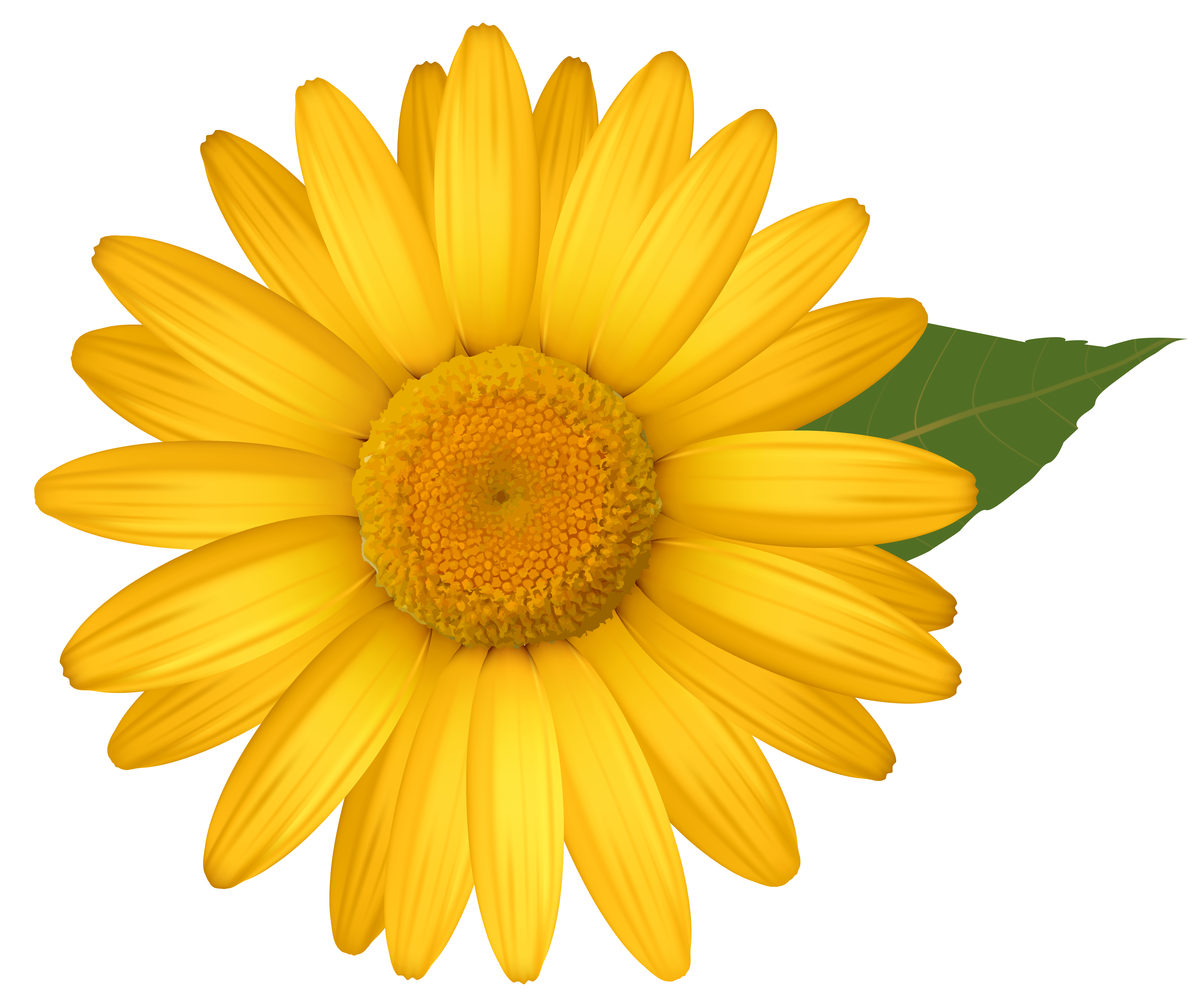Yellow daisies clipart 20 free Cliparts | Download images ...