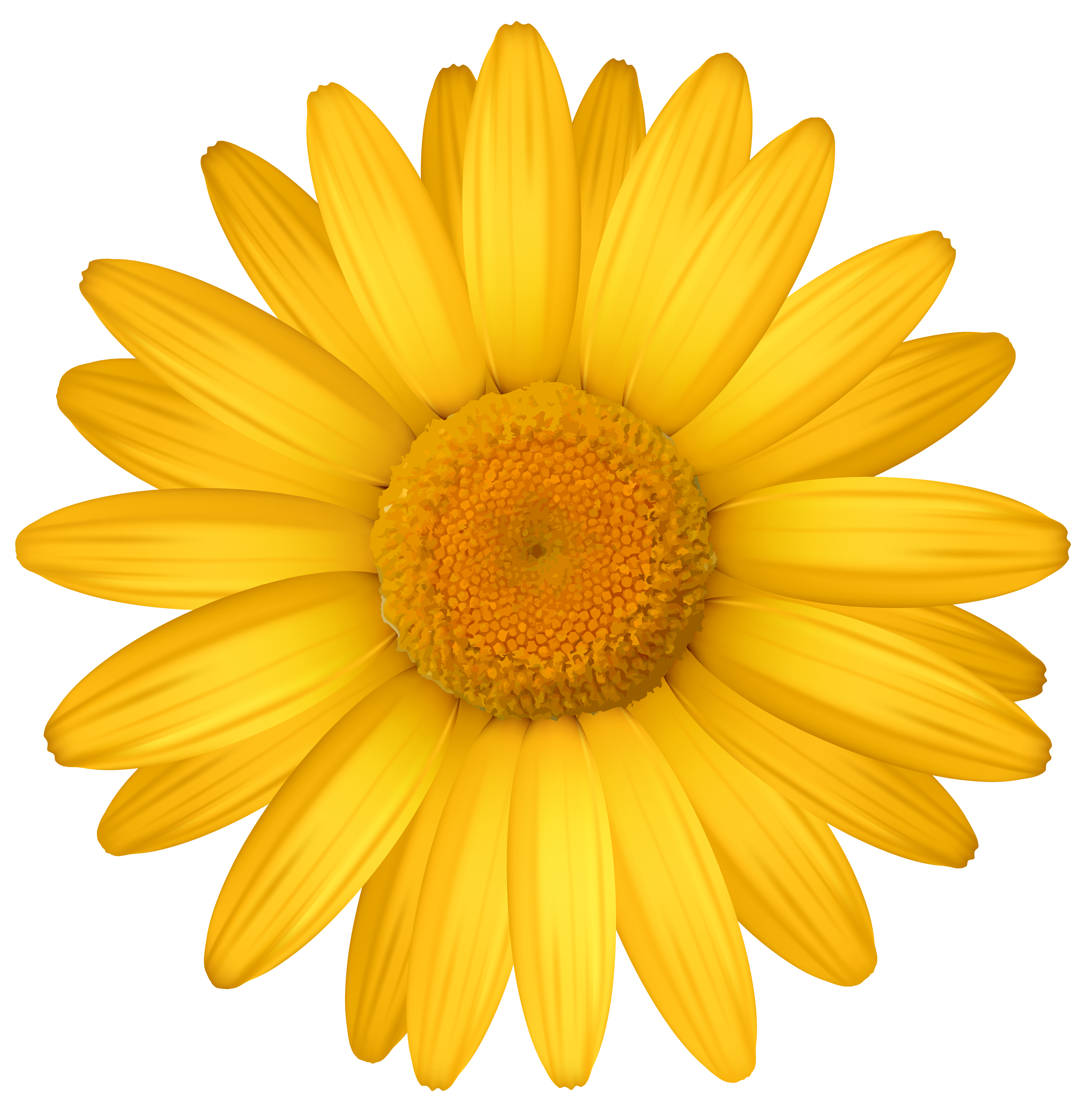 yellow daisies clipart clipground
