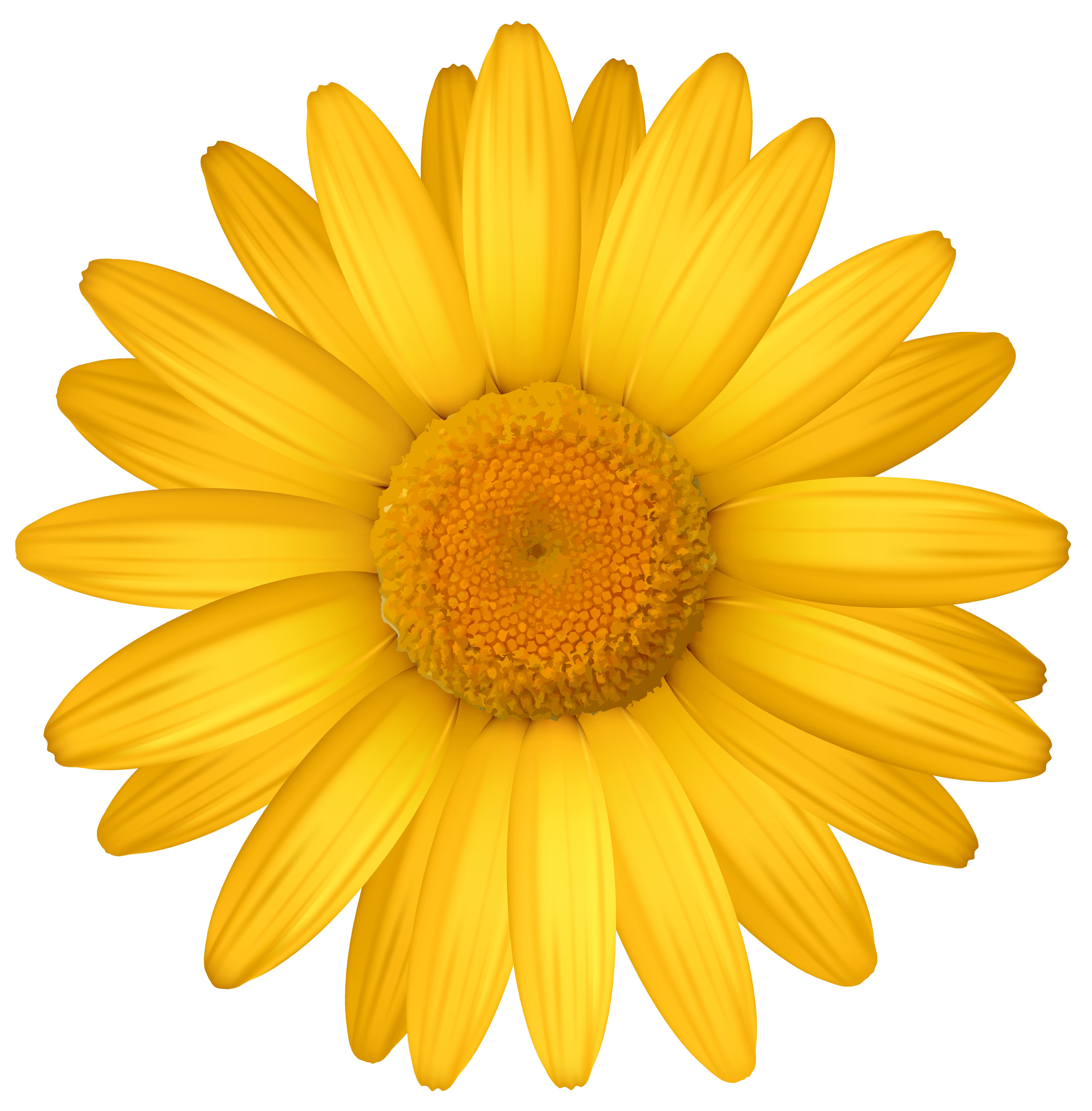 Yellow daisy clipart image.