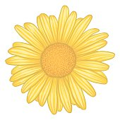Yellow Daisy Clip Art, Vector Yellow Daisy.