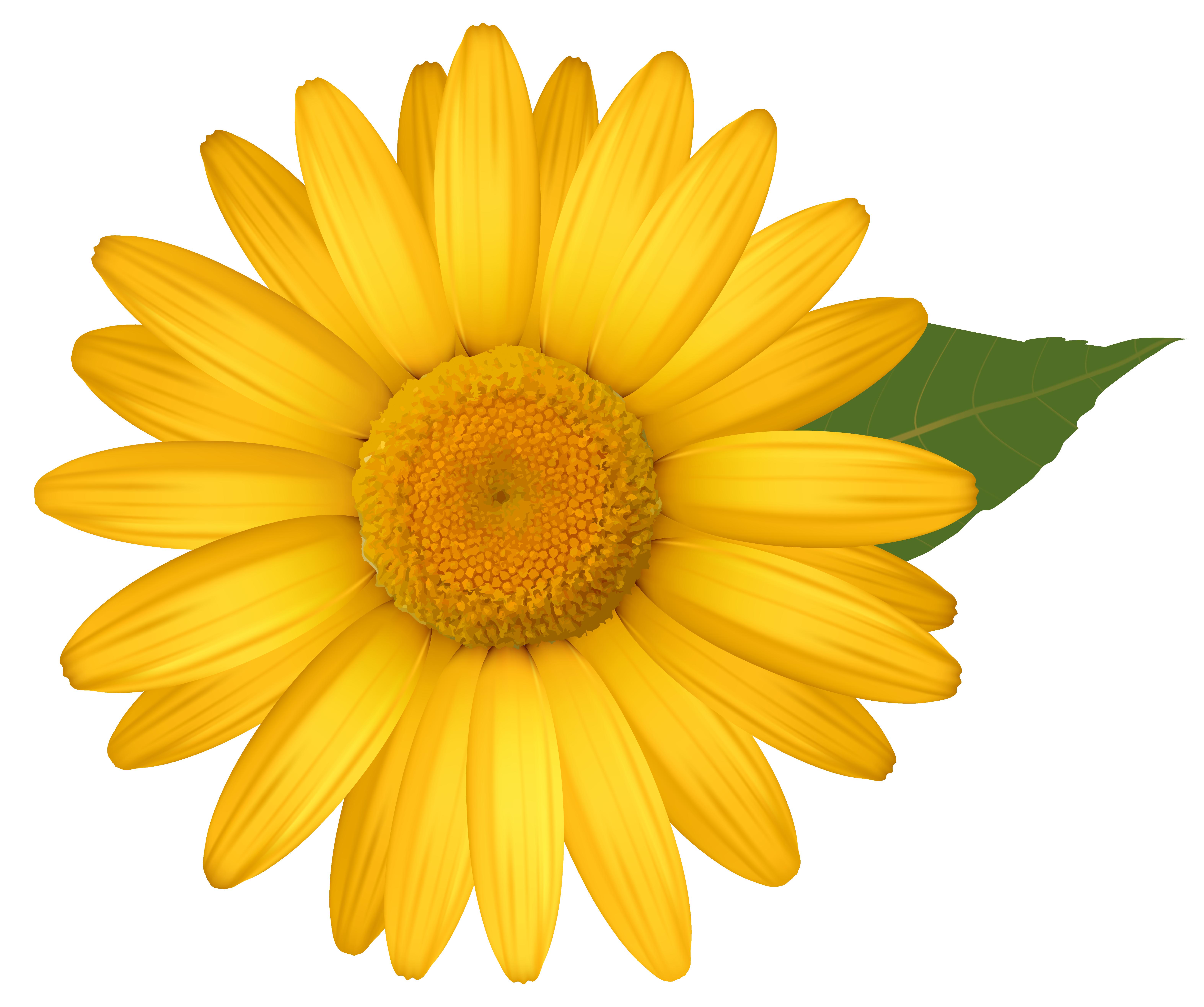 Yellow Daisy Clip Art.