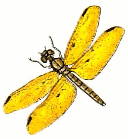 Free dragonfly clip art 4.