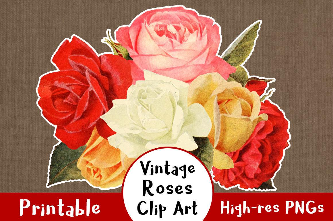 38 Vintage Rose Clipart, Floral Clipart, Flower Clipart.