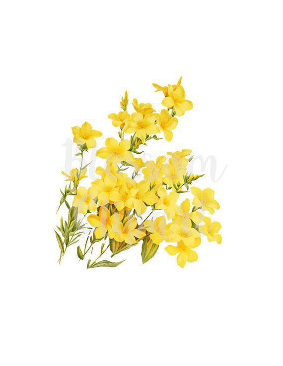 Flower Clip Art Yellow Flowers Digital Download Botanical.