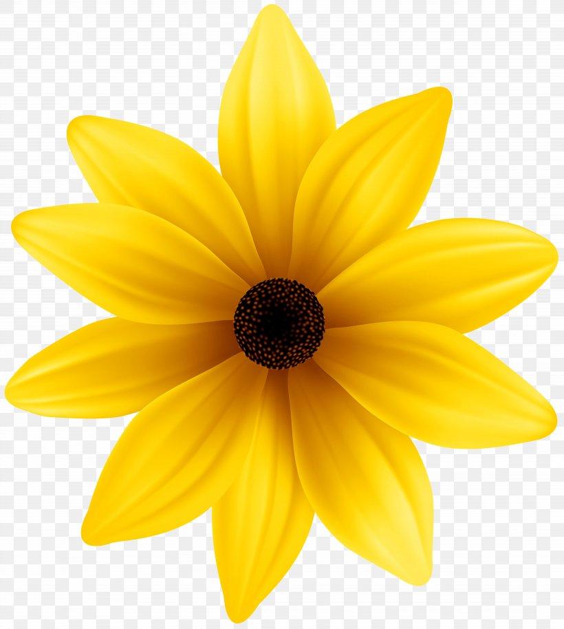 Yellow Dahlia Petal, PNG, 7177x8000px, Daisy Family, Close.
