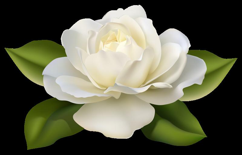 Rose White Flower Clip art.