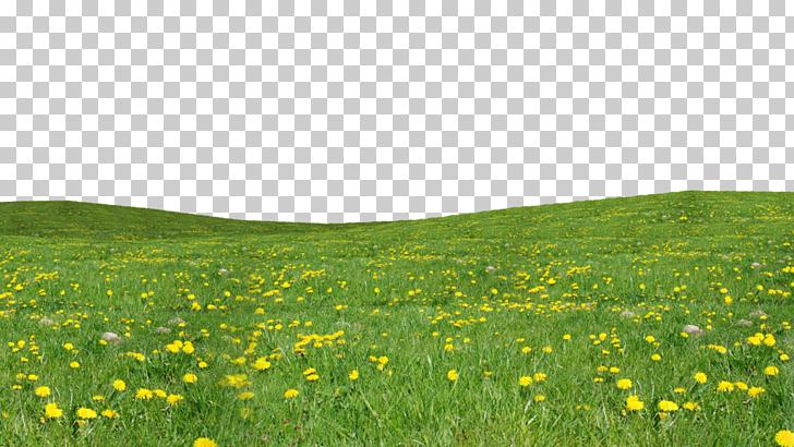Garden Computer file, Grass , yellow flower field art PNG.