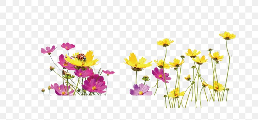 Floral Design Yellow Flower, PNG, 784x383px, Floral Design.
