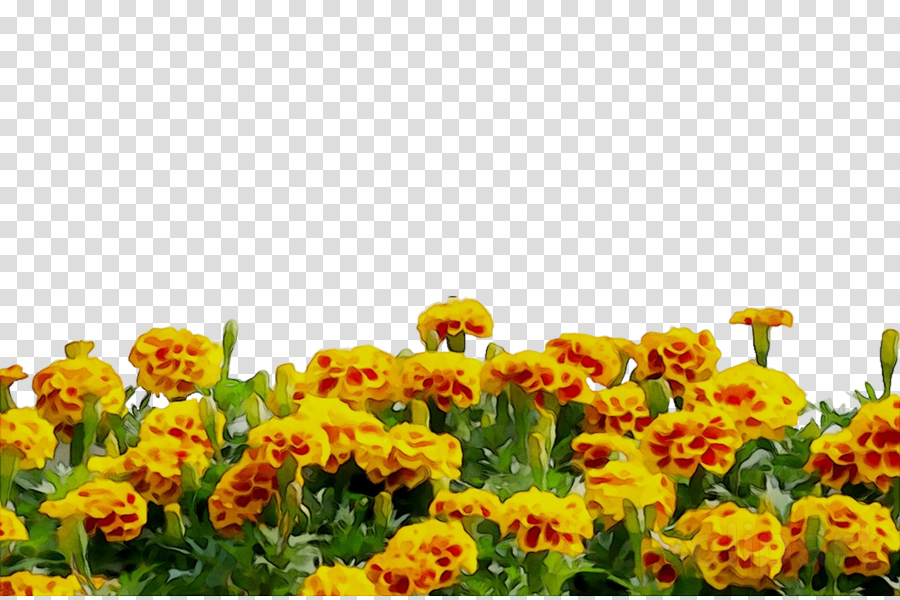 Flower Field clipart.
