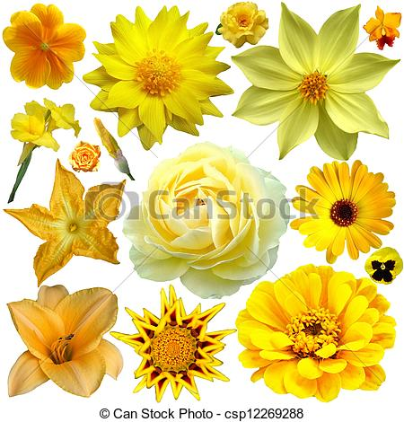 Stock Illustration of yellow flower collage.