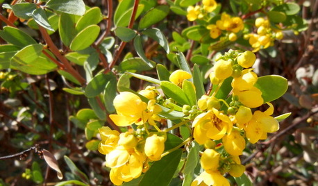 Yellow Flowers: Tips From the Experts.