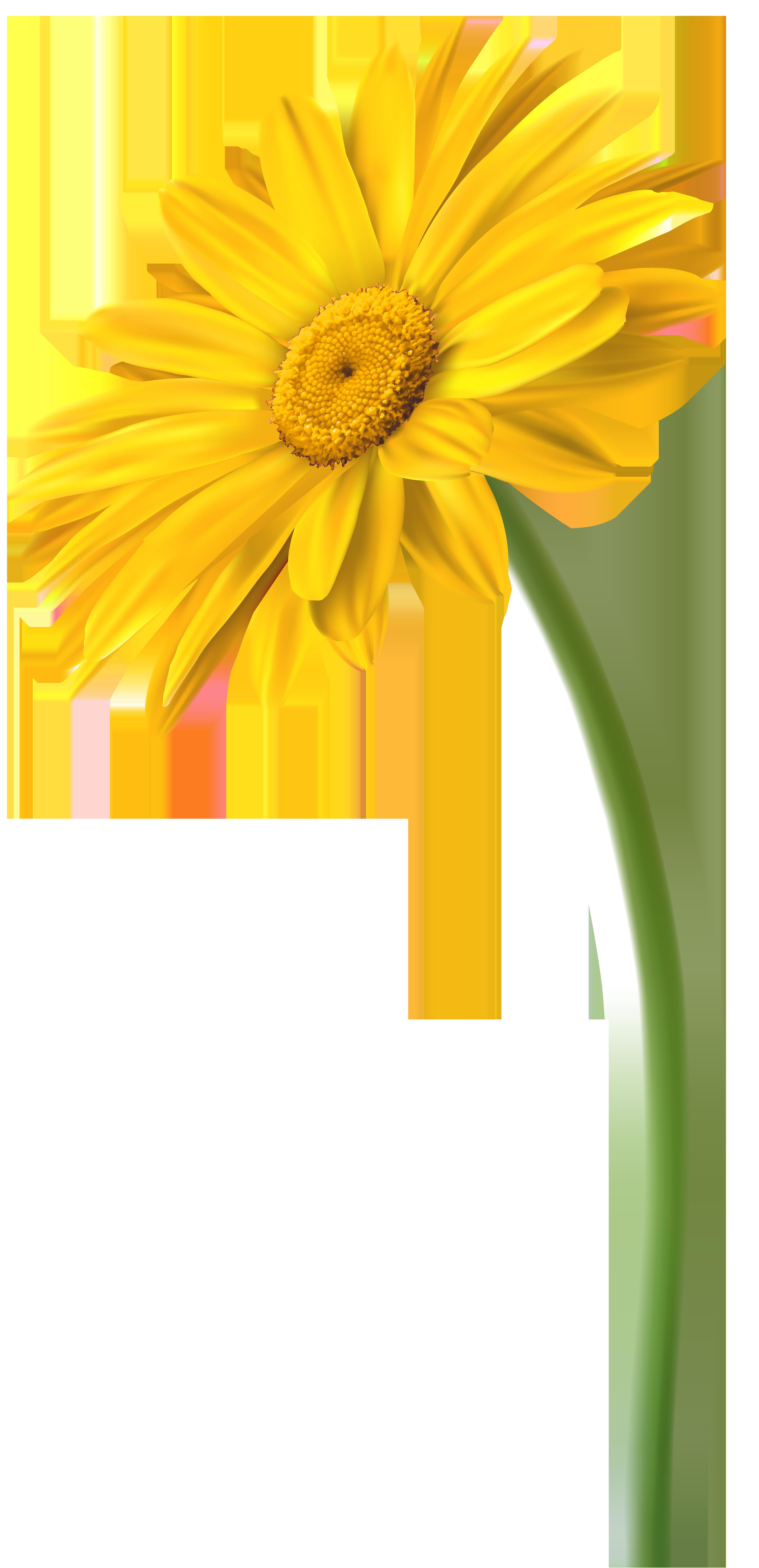 Yellow Gerbera Flower PNG Clip Art Image.
