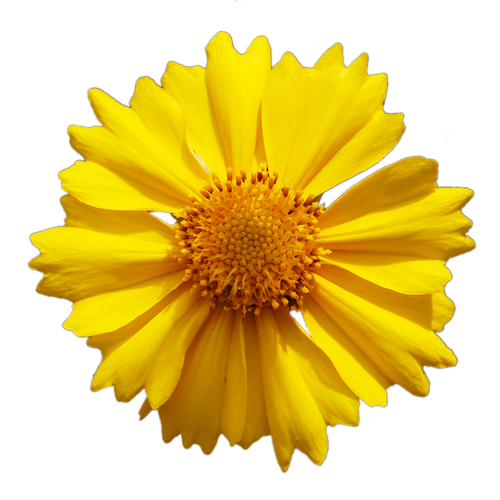 Collection of 14 free Yellow flowers png bill clipart dollar sign.