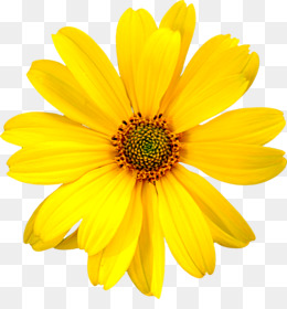 Yellow Flower Png (98+ images in Collection) Page 1.