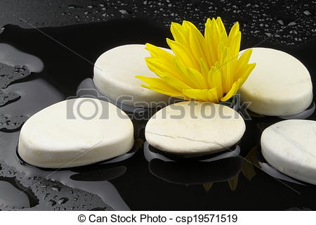 Stock Photography of Yellow flower and white stones with water on.