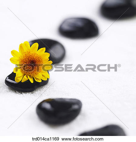 Stock Photograph of object, powder, stone, flower, yellow.