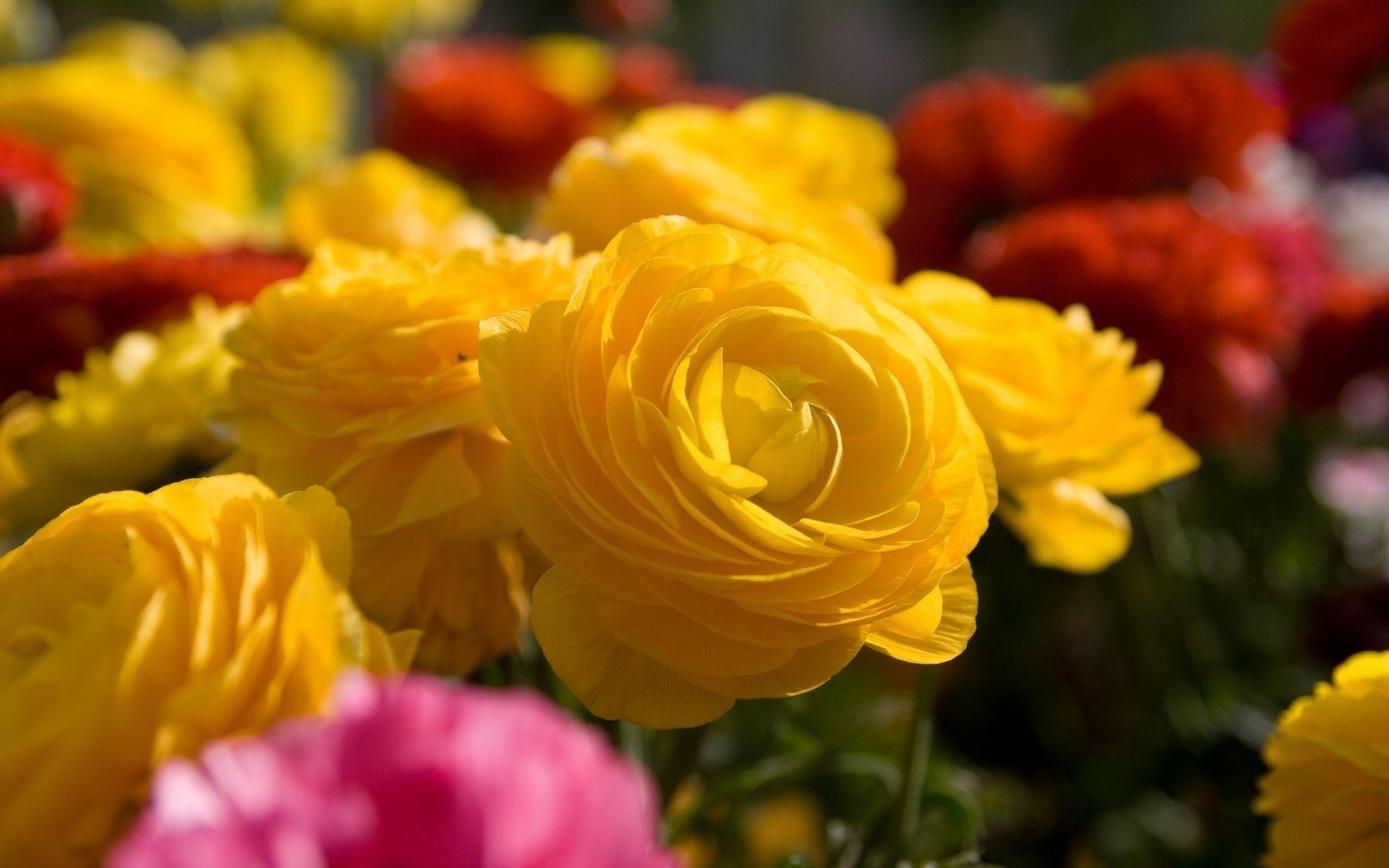 Yellow Flowers Image.