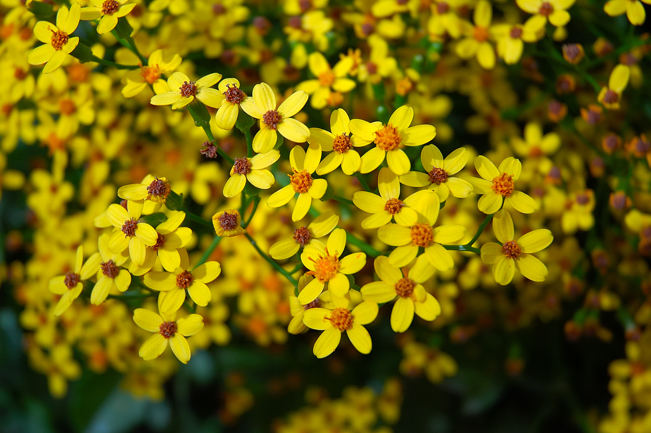 Yellow Flowers Image Clipground