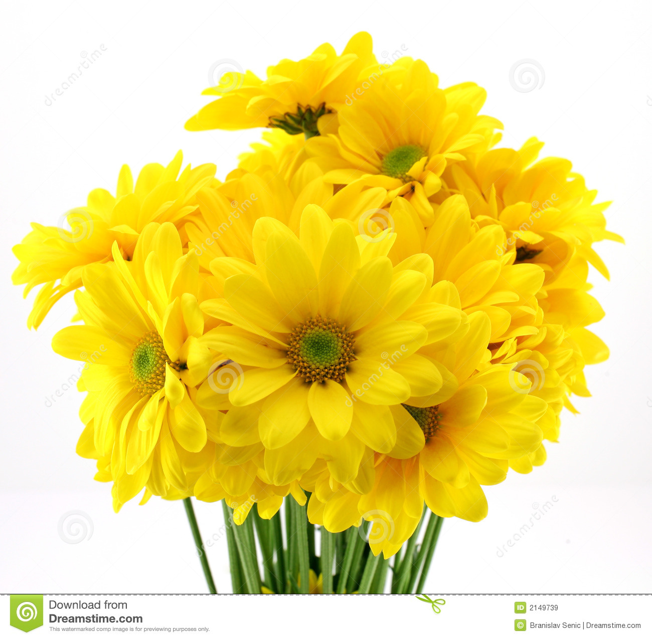 yellow flowers images.