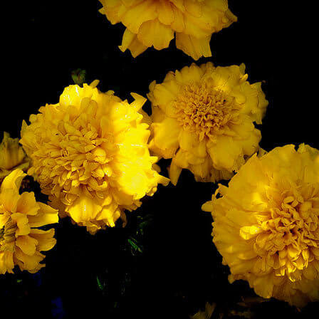 Top 25 Most Beautiful Yellow Flowers.