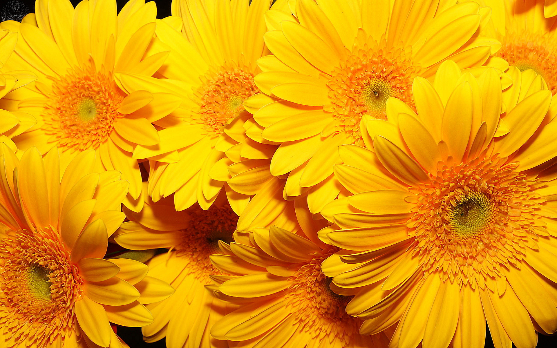 Yellow Flowers Wallpapers, 46 PC Yellow Flowers Images in Special.