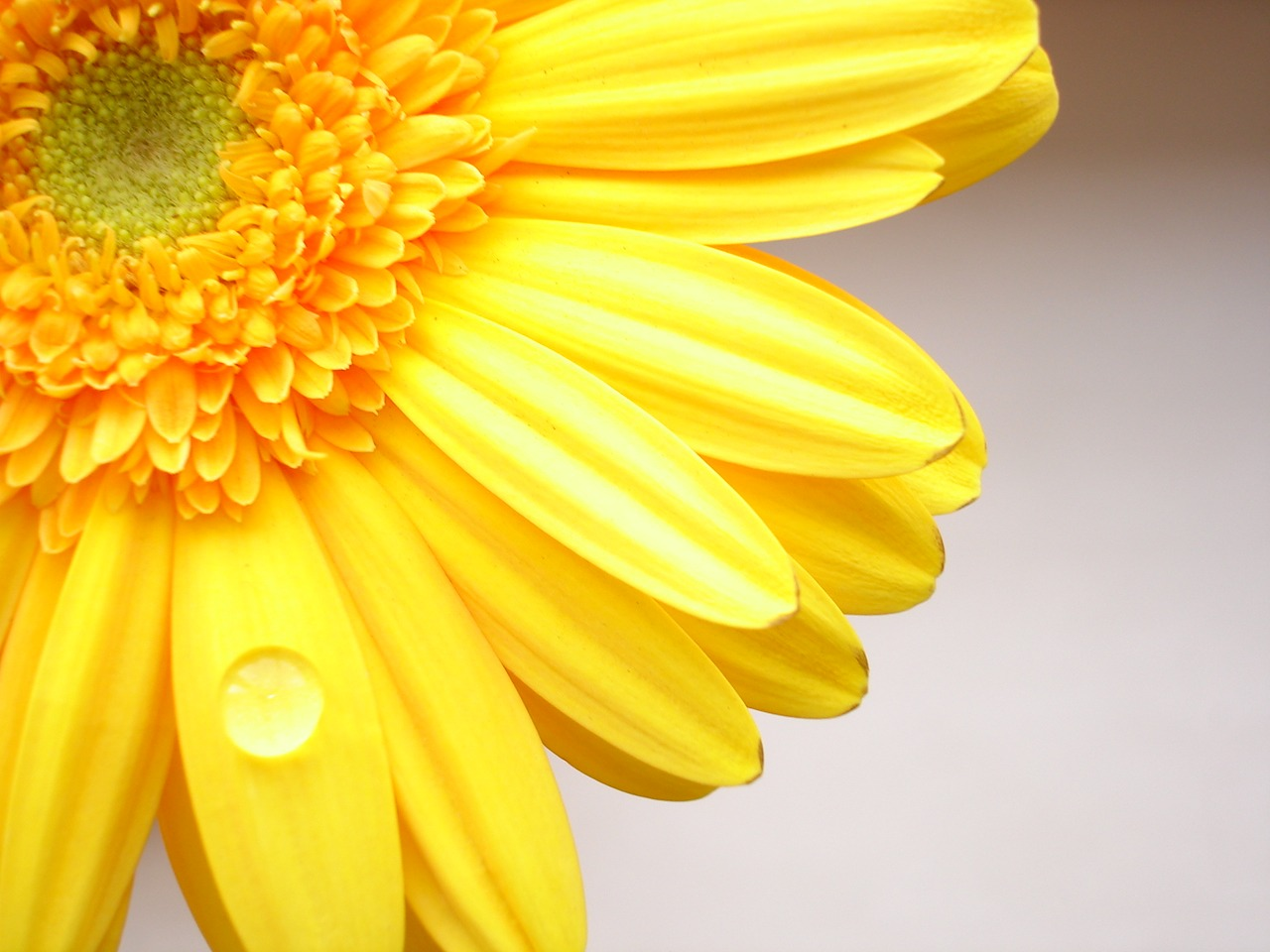 Yellow Flowers wallpaper.