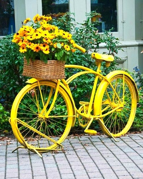 25+ best ideas about Yellow Flowers on Pinterest.