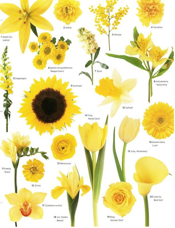Types Of Flowers And Pictures Ideas For Review Source 25 Best About Yellow