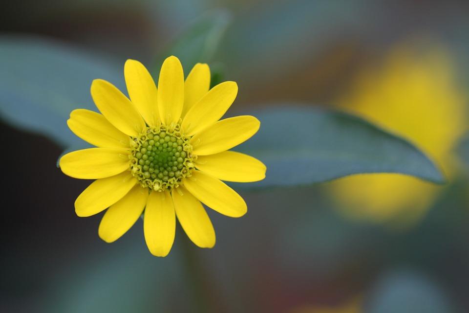 Yellow, Flowers.