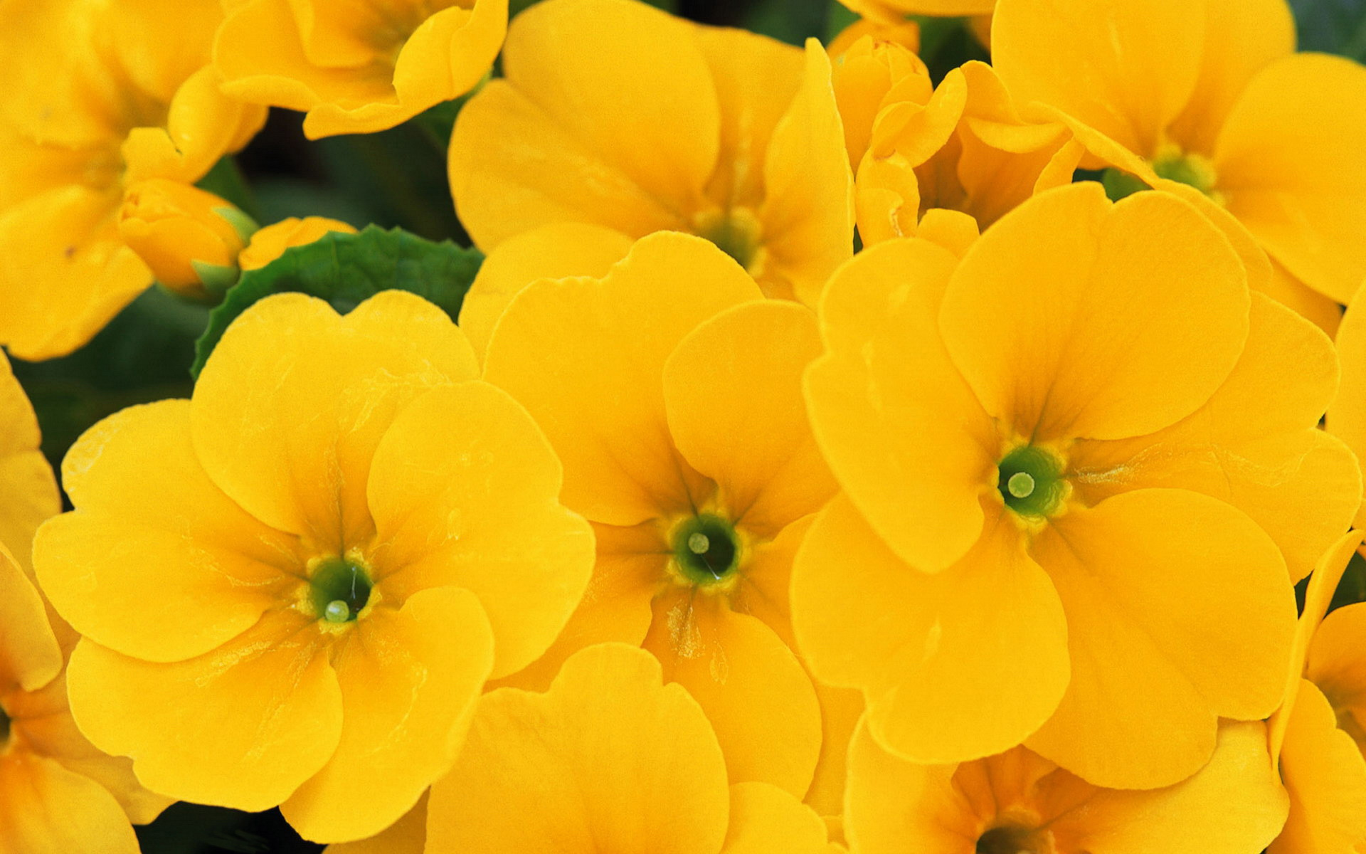 Wallpaper's Collection: «Yellow Flowers Wallpapers».