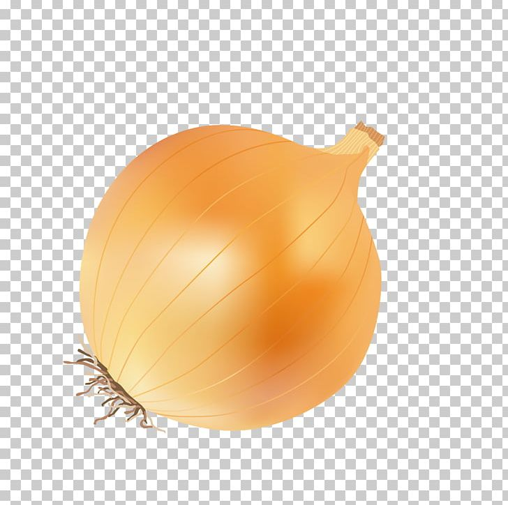 Yellow Onion Calabaza Fruit Kitchen PNG, Clipart.