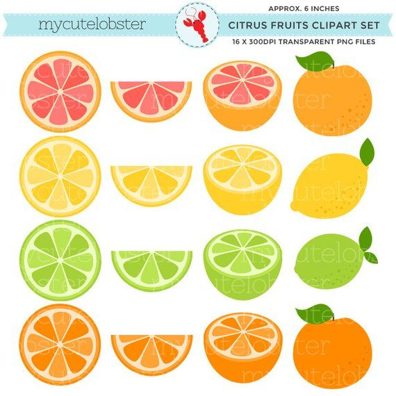 Citrus Fruits Clipart Set.