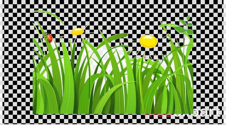 green grass plant yellow grass family clipart.