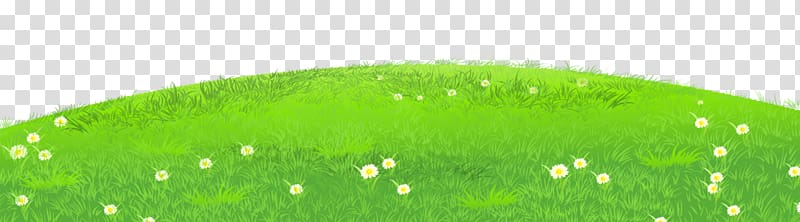 Grass with Daisies , green grass illustration transparent.