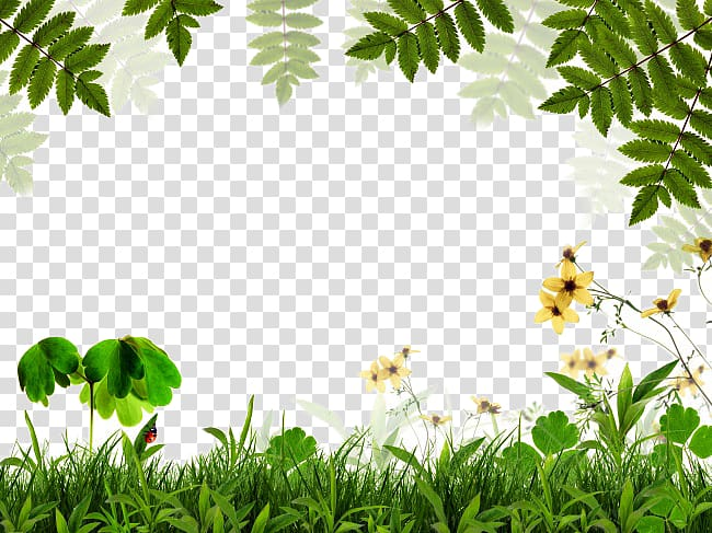 Yellow petaled flowers and green grass illustration, Green.