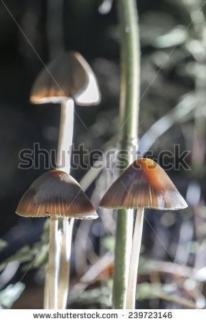 Small Fragile Group Mushroom Stock Photos, Royalty.
