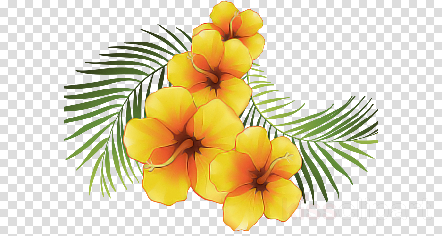 frangipani flower yellow hawaiian hibiscus plant clipart.