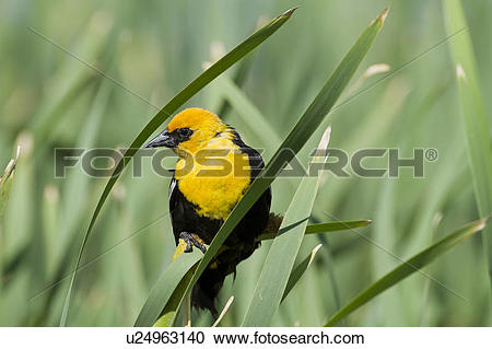 Stock Photography of Yellow.