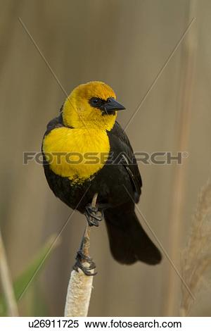 Stock Image of Yellow.