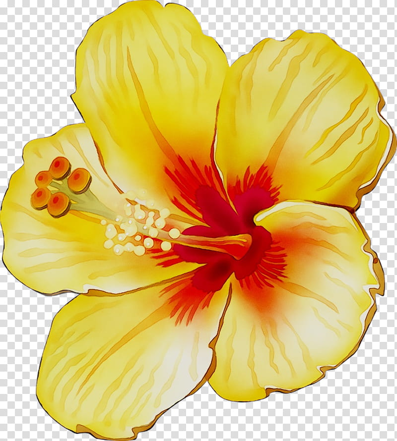 Flowers, Rosemallows, Yellow, Cut Flowers, Herbaceous Plant.