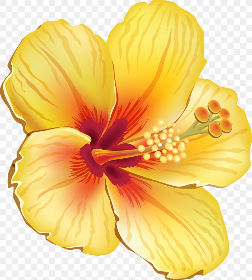 Hawaiian Hibiscus Shoeblackplant Flower Clip Art, PNG.