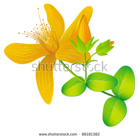 St Johns Wort Stock Images, Royalty.