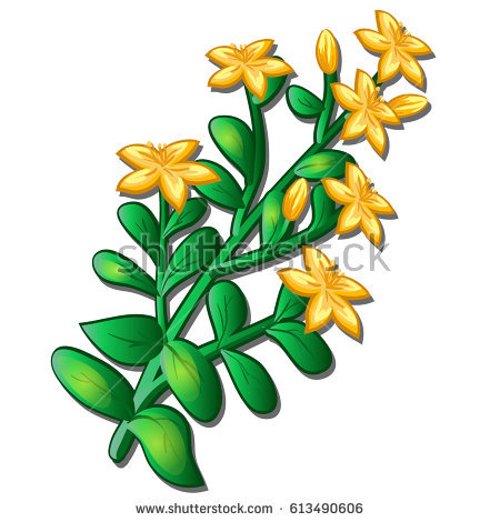Hypericum Stock Images, Royalty.