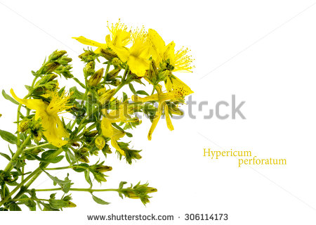 Hypericum Perforatum Stock Photos, Royalty.