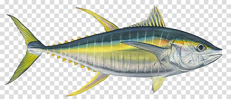 Yellow and black fish , Mackerel Bigeye tuna Yellowfin tuna.